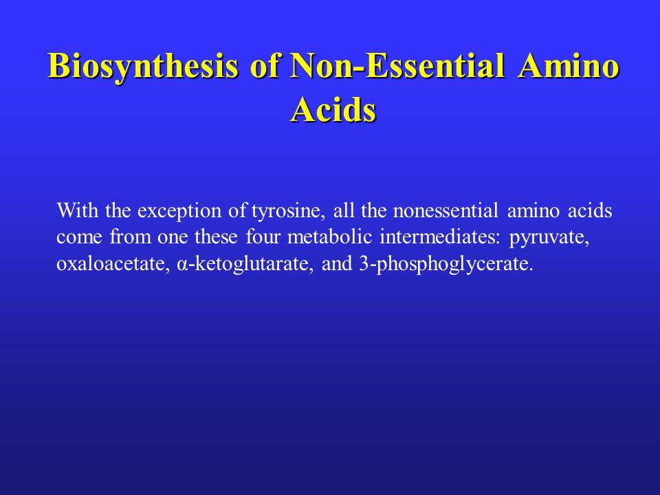 Biosynthesis of Non-Essential Amino Acids