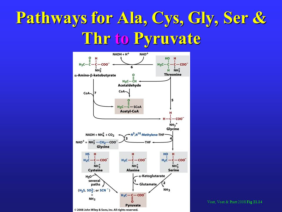Pathways for Ala, Cys, Gly, Ser & Thr to Pyruvate