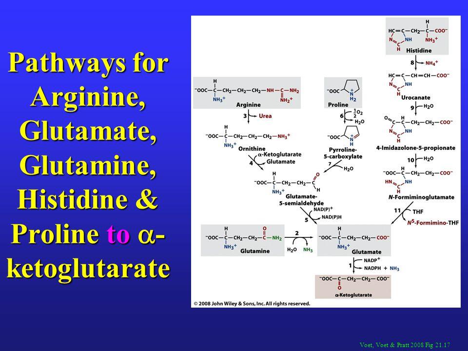 Pathways for Arginine, Glutamate, Glutamine, Histidine & Proline to -ketoglutarate
