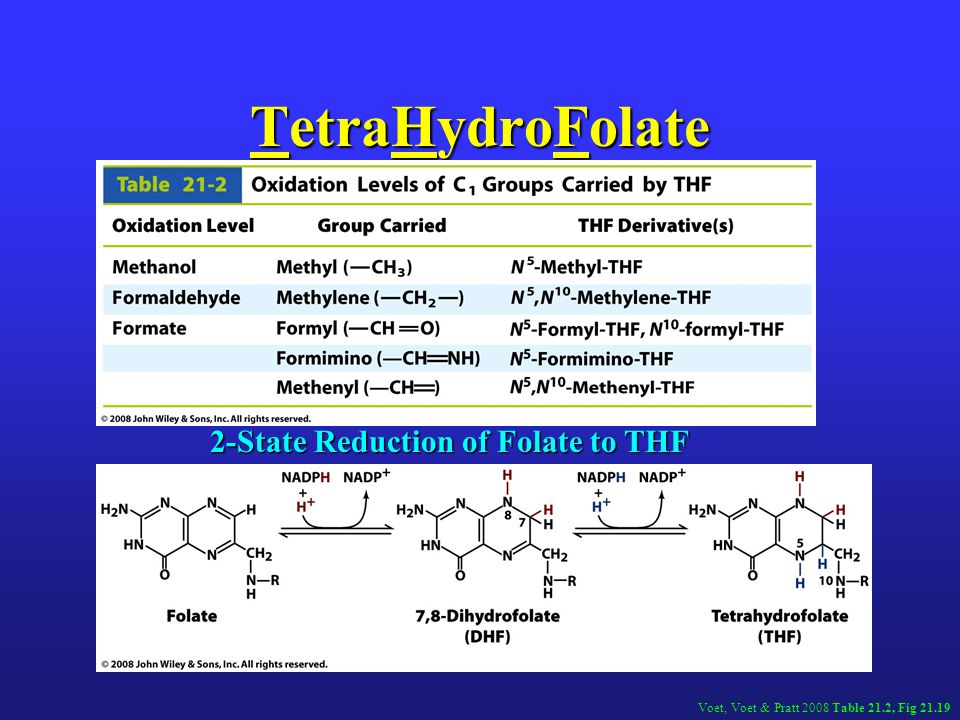 TetraHydroFolate 2-State Reduction of Folate to THF