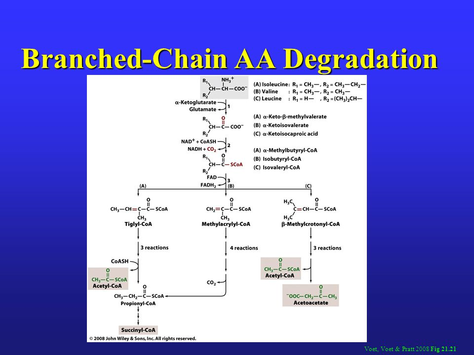 Branched-Chain AA Degradation