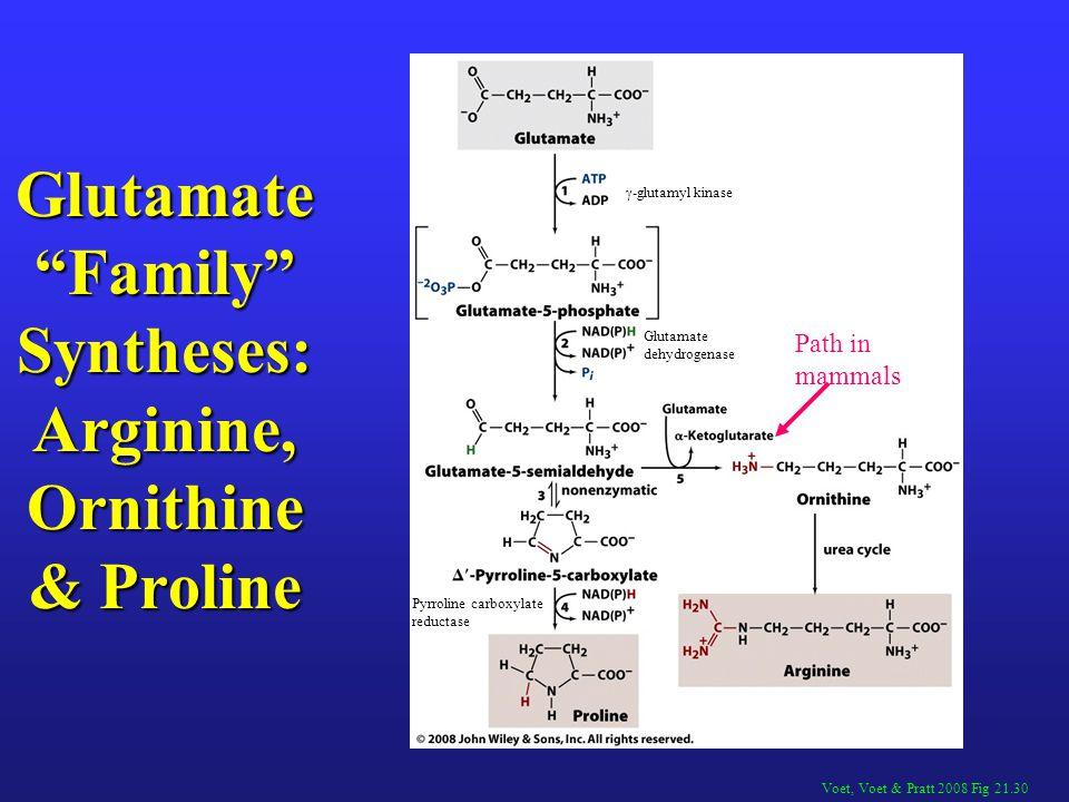Glutamate Family Syntheses: Arginine, Ornithine & Proline