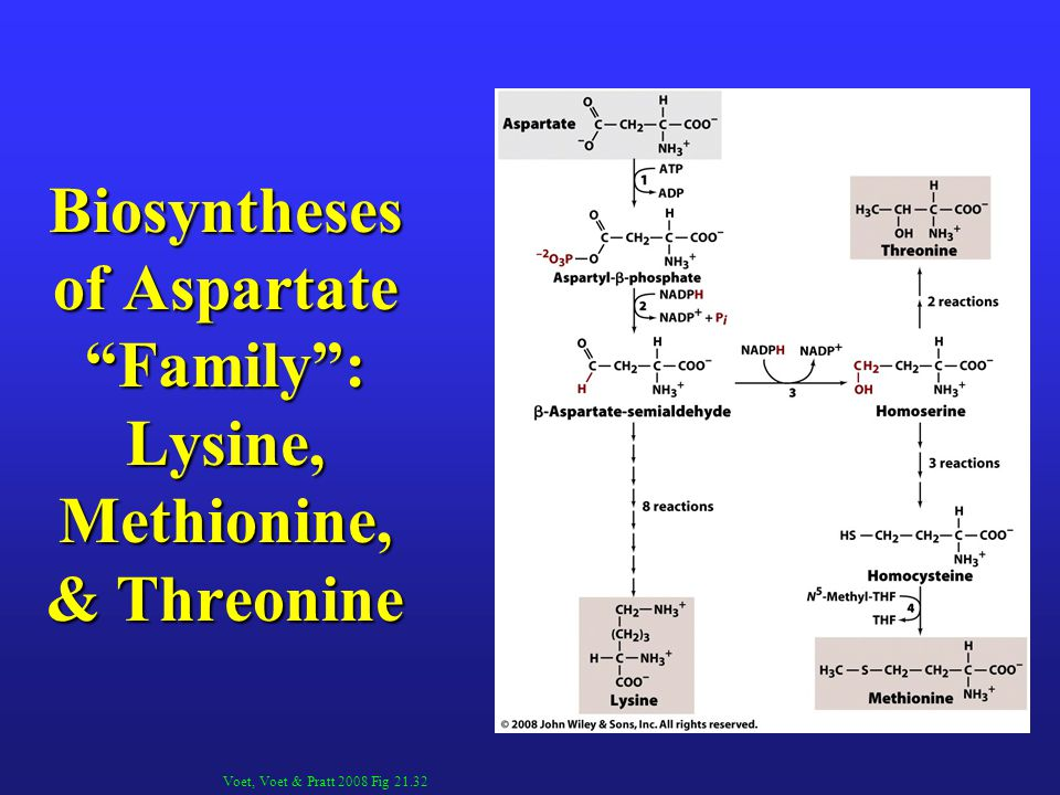 Biosyntheses of Aspartate Family : Lysine, Methionine, & Threonine