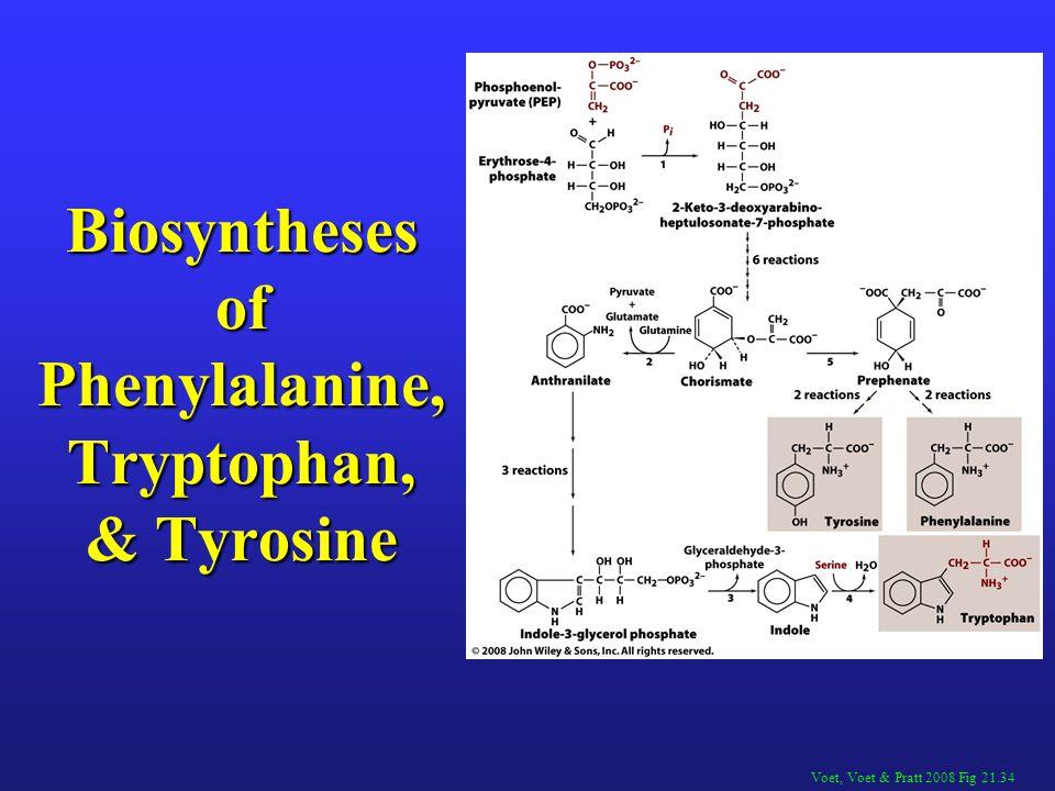 Biosyntheses of Phenylalanine, Tryptophan, & Tyrosine