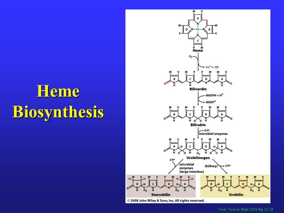 Heme Biosynthesis Voet, Voet & Pratt 2008 Fig 21.38
