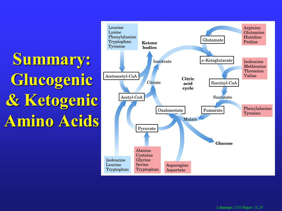 Amino Acid Metabolism Student Edition 6/3/13 version - ppt video online download