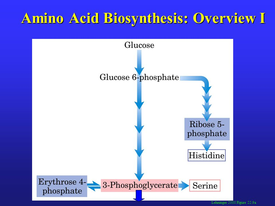 Amino Acid Biosynthesis: Overview I