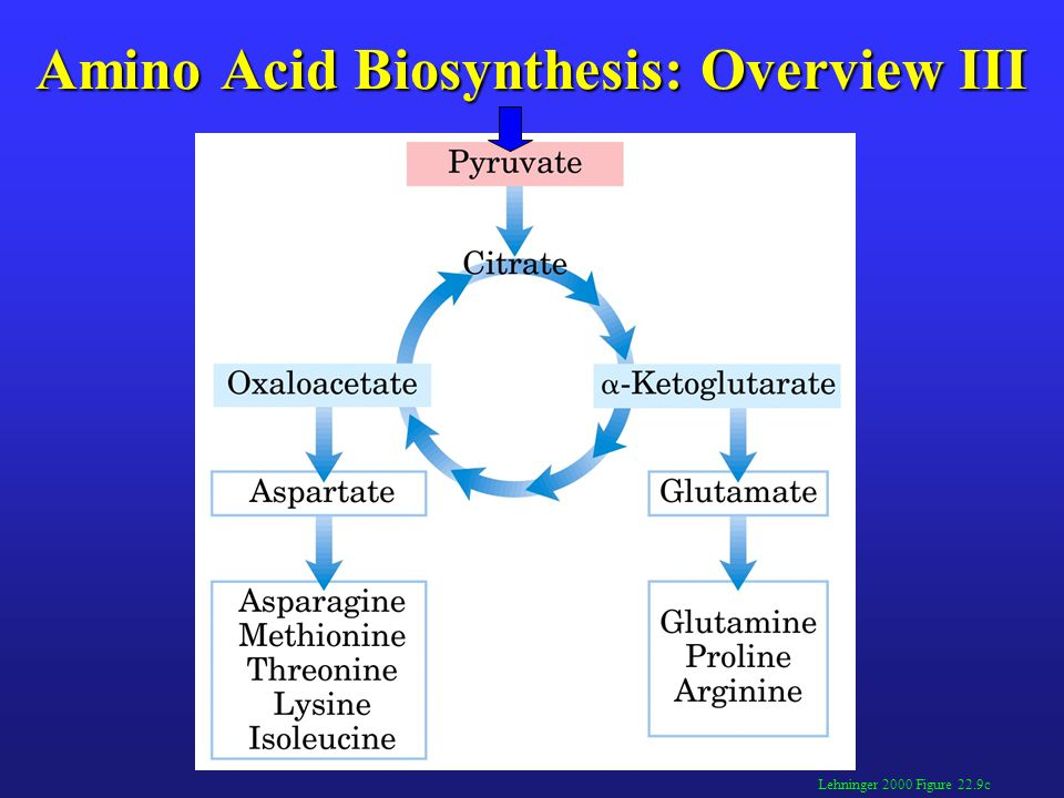 Amino Acid Biosynthesis: Overview III