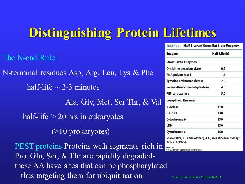 Distinguishing Protein Lifetimes