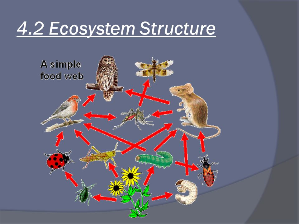 4.2 Ecosystem Structure