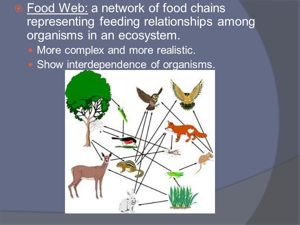 Food Web: a network of food chains representing feeding relationships among organisms in an ecosystem.