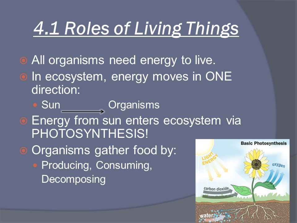 4.1 Roles of Living Things All organisms need energy to live.