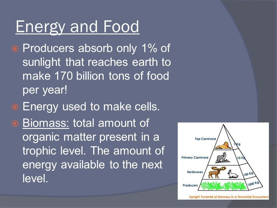 Energy and Food Producers absorb only 1% of sunlight that reaches earth to make 170 billion tons of food per year!