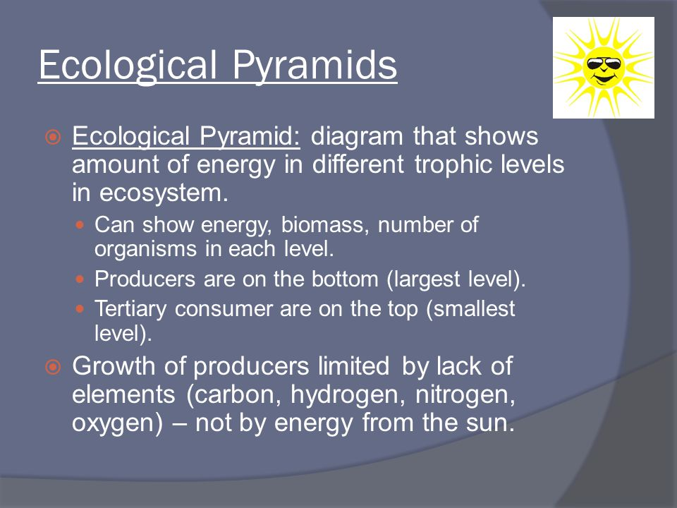 Ecological Pyramids Ecological Pyramid: diagram that shows amount of energy in different trophic levels in ecosystem.