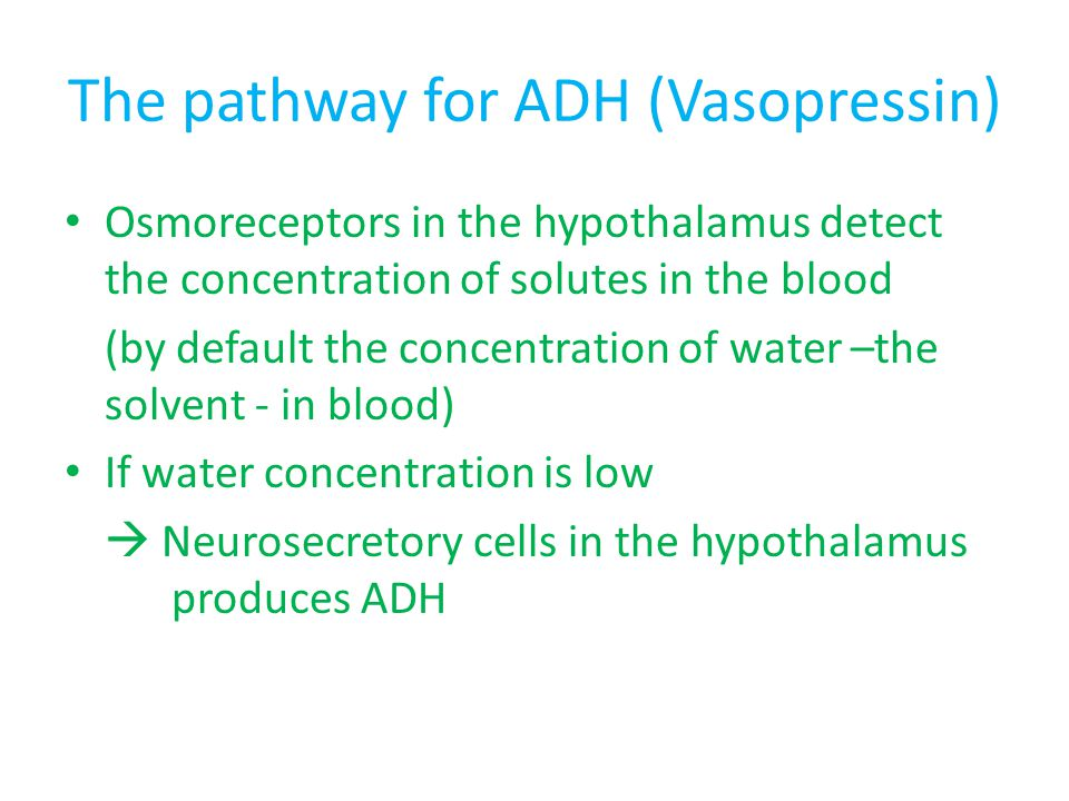 The pathway for ADH (Vasopressin)