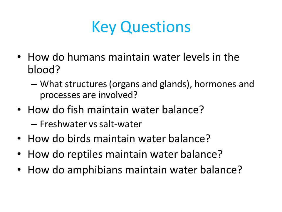 Key Questions How do humans maintain water levels in the blood
