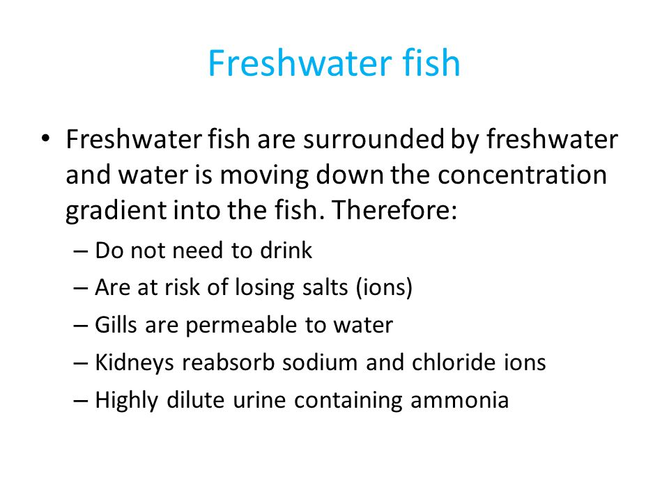 Freshwater fish Freshwater fish are surrounded by freshwater and water is moving down the concentration gradient into the fish. Therefore:
