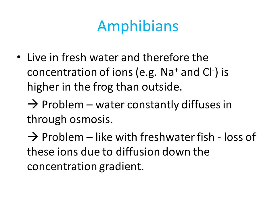 Amphibians Live in fresh water and therefore the concentration of ions (e.g. Na+ and Cl-) is higher in the frog than outside.