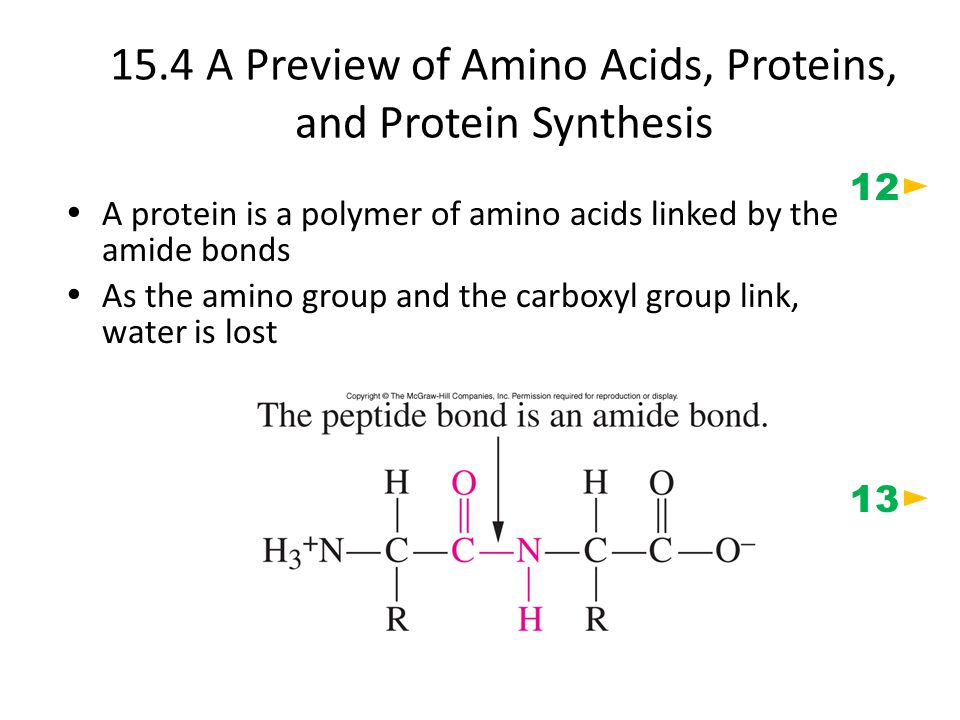 15.4 A Preview of Amino Acids, Proteins, and Protein Synthesis