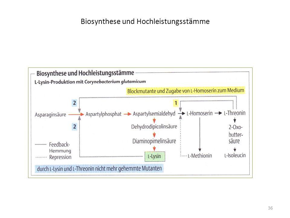 Biosynthese und Hochleistungsstämme