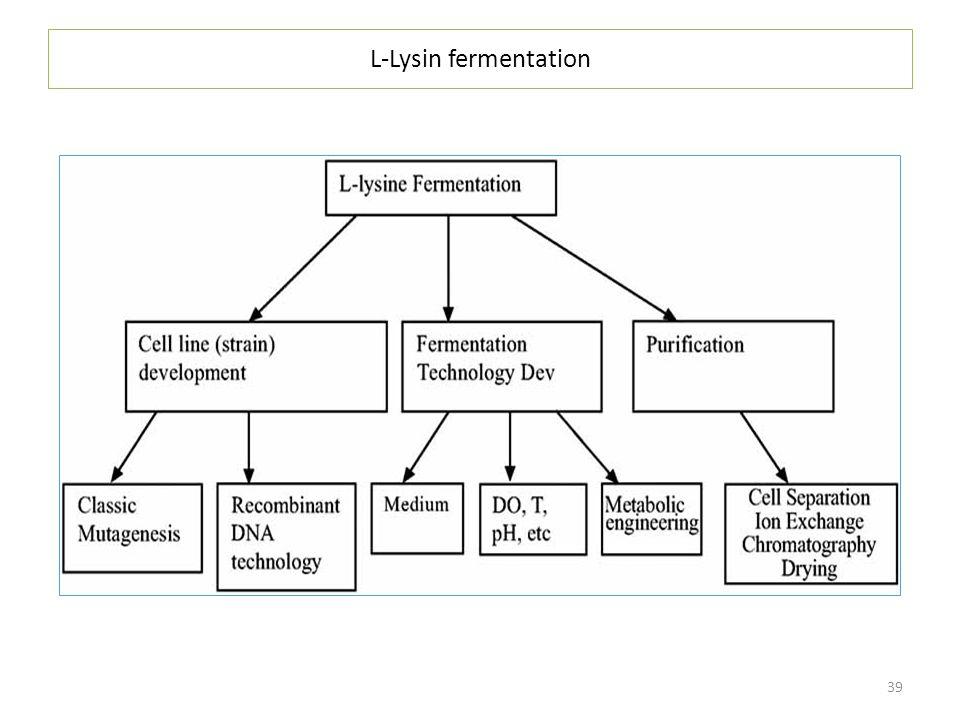 L-Lysin fermentation
