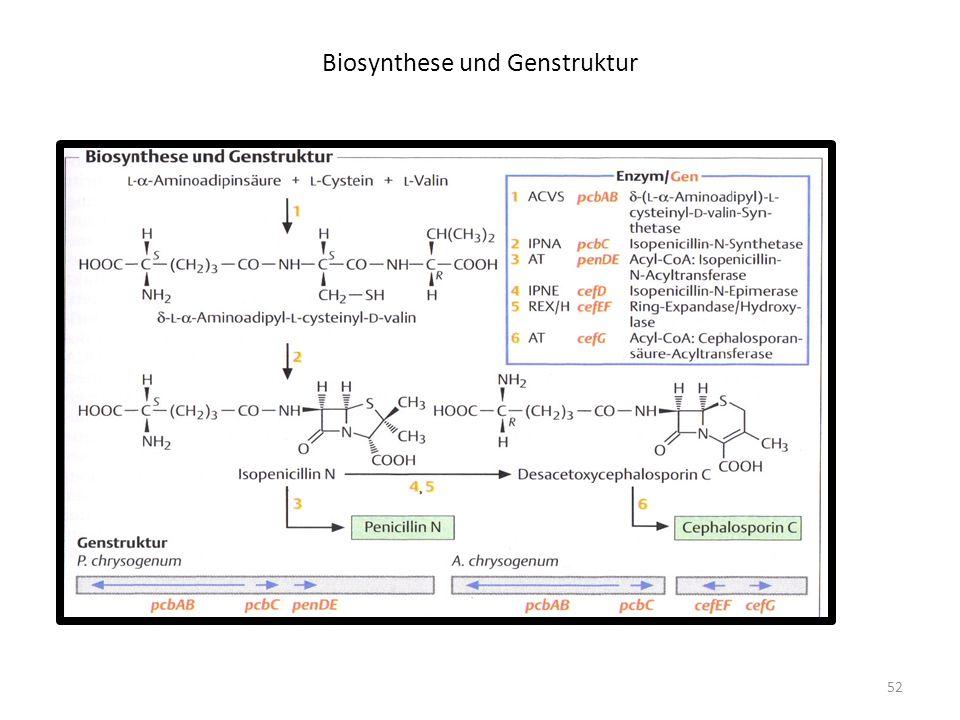 Biosynthese und Genstruktur
