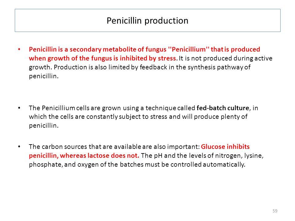 Penicillin production