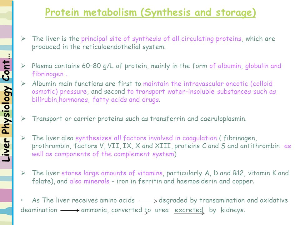 Protein metabolism (Synthesis and storage)