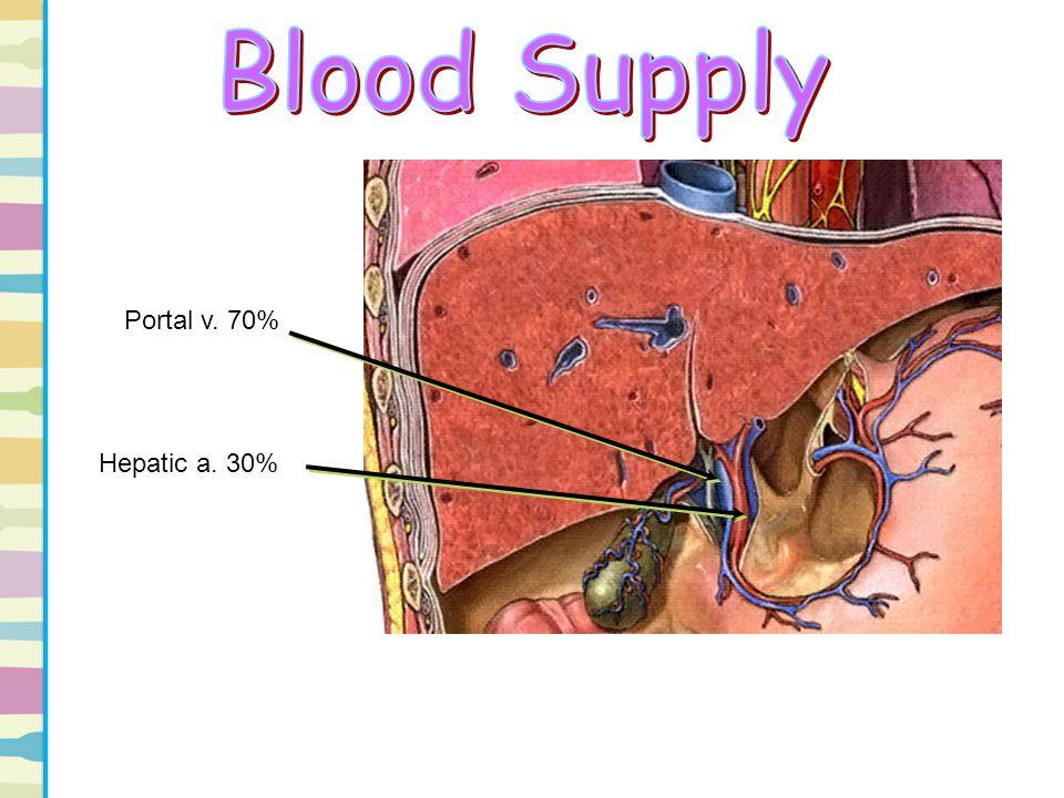 Blood Supply Portal v. 70% Hepatic a. 30%