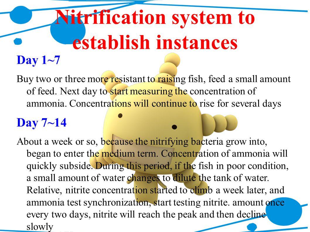 Nitrification system to establish instances
