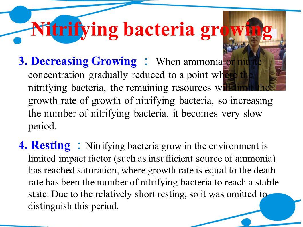 Nitrifying bacteria growing