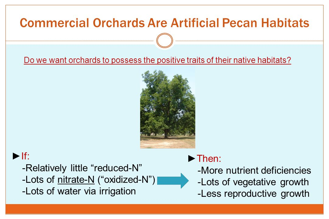 Commercial Orchards Are Artificial Pecan Habitats