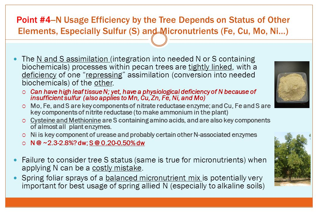 Point #4--N Usage Efficiency by the Tree Depends on Status of Other Elements, Especially Sulfur (S) and Micronutrients (Fe, Cu, Mo, Ni…)