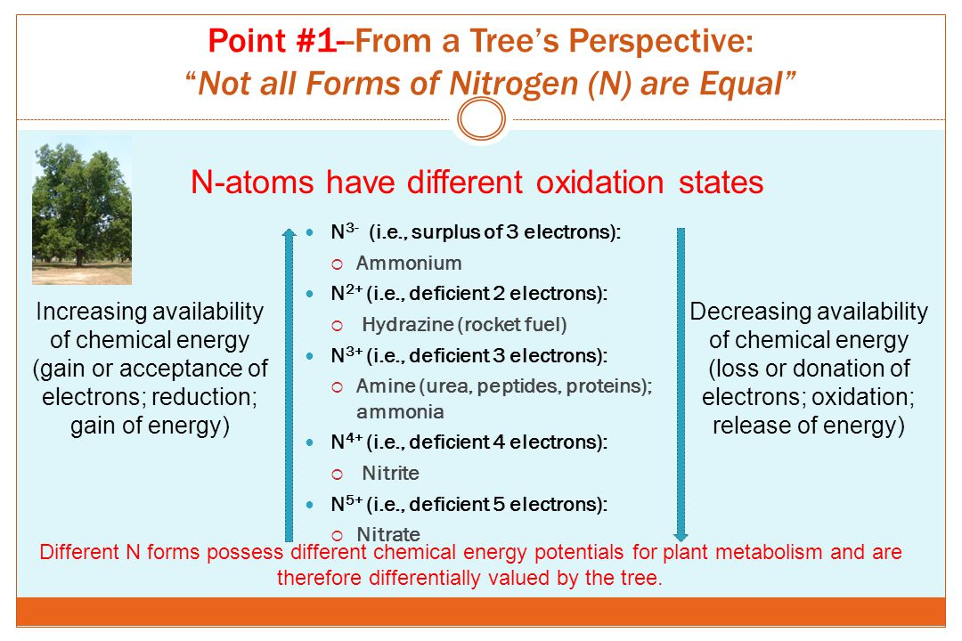 Point #1--From a Tree's Perspective: Not all Forms of Nitrogen (N) are Equal