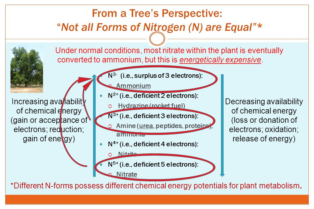 From a Tree's Perspective: Not all Forms of Nitrogen (N) are Equal *