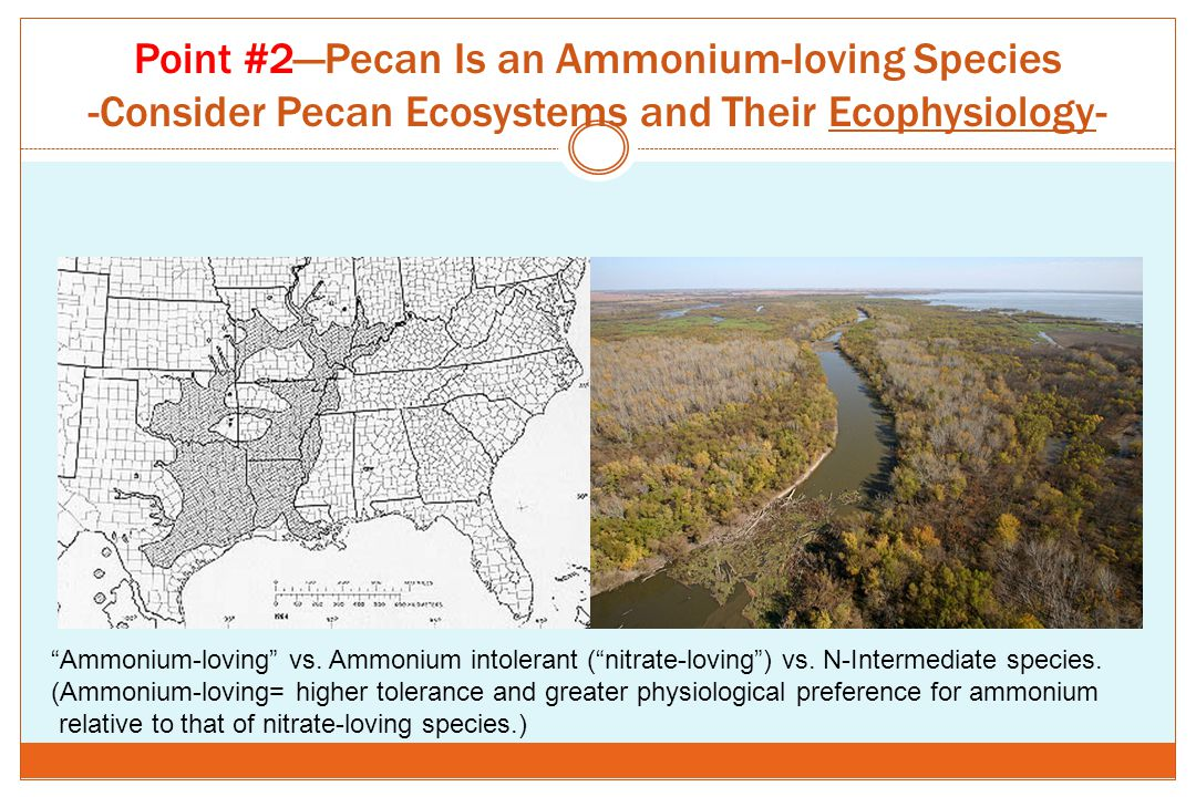 Point #2—Pecan Is an Ammonium-loving Species -Consider Pecan Ecosystems and Their Ecophysiology-