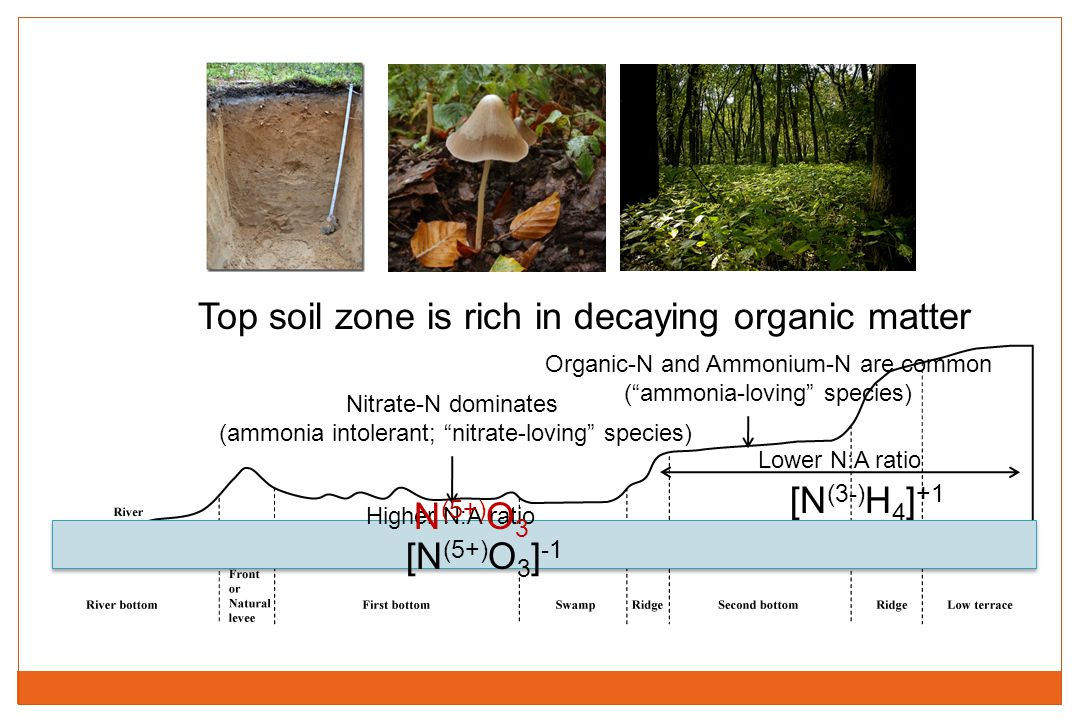 Top soil zone is rich in decaying organic matter