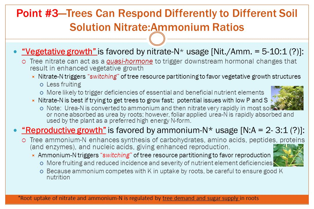 Point #3—Trees Can Respond Differently to Different Soil Solution Nitrate:Ammonium Ratios