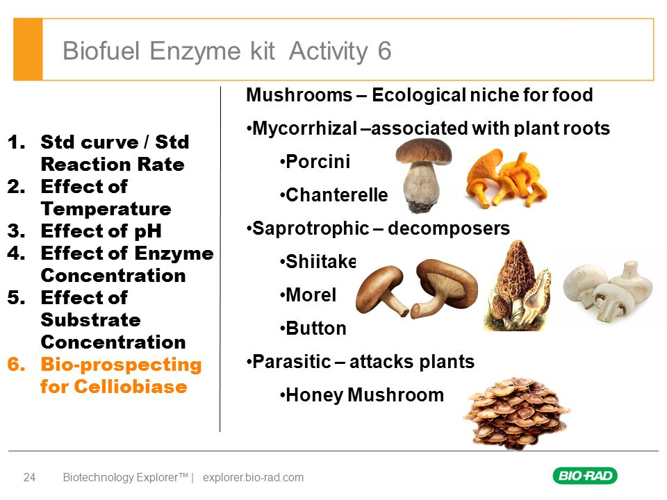 Biofuel Enzyme kit Activity 6