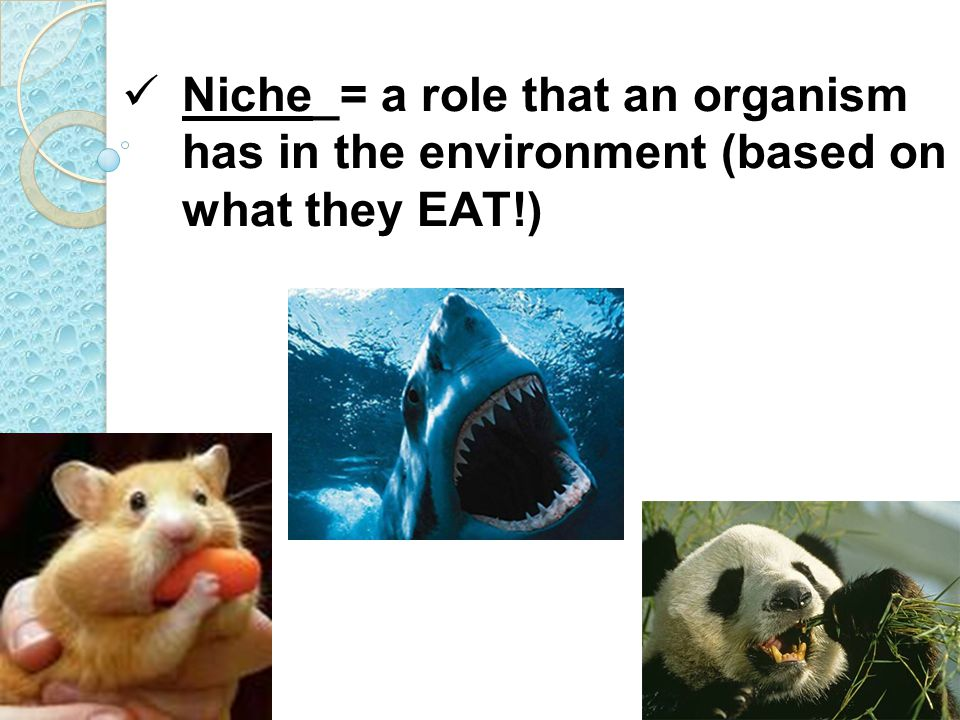 Niche_= a role that an organism has in the environment (based on what they EAT!)