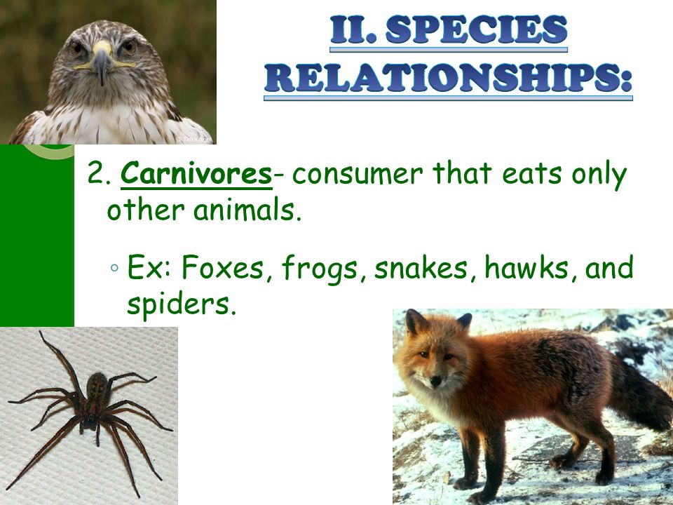 II. SPECIES RELATIONSHIPS: