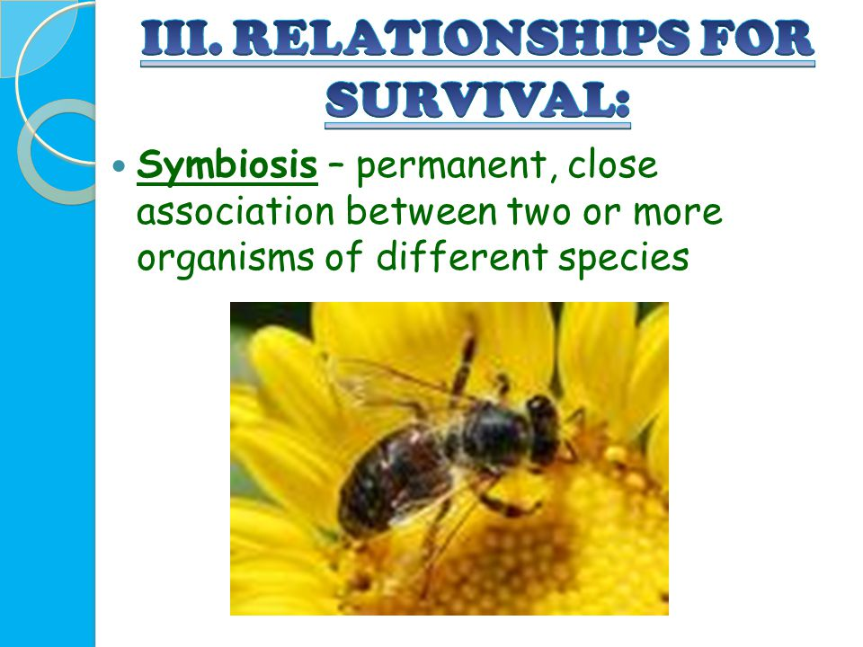 III. RELATIONSHIPS FOR SURVIVAL: