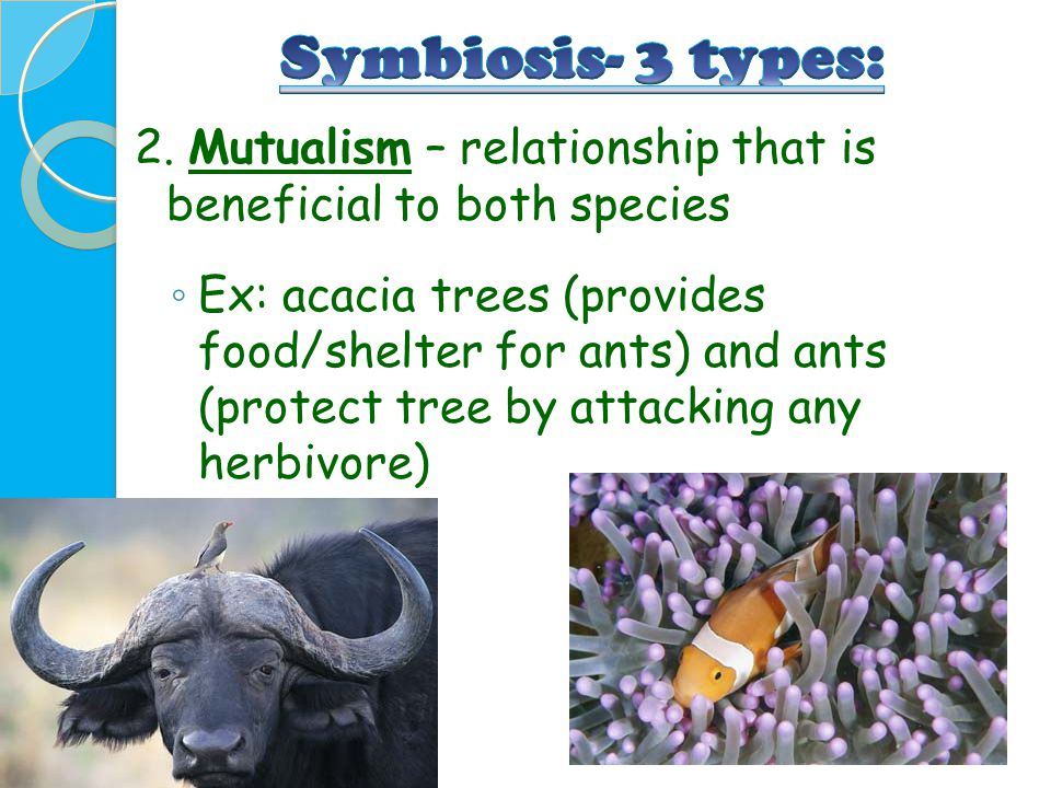 Symbiosis- 3 types: 2. Mutualism – relationship that is beneficial to both species.