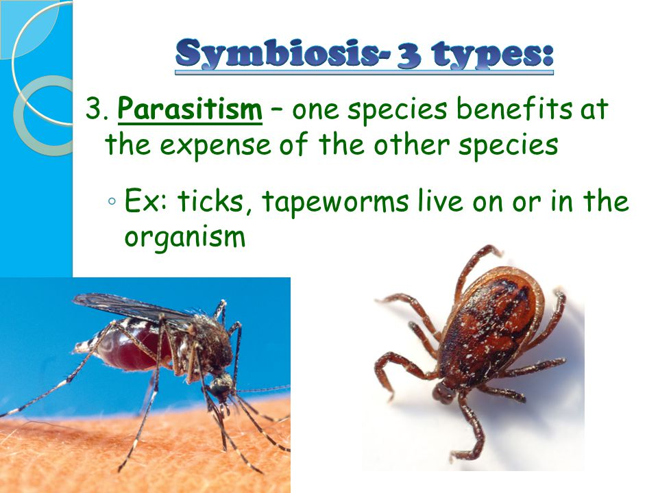 Symbiosis- 3 types: 3. Parasitism – one species benefits at the expense of the other species.