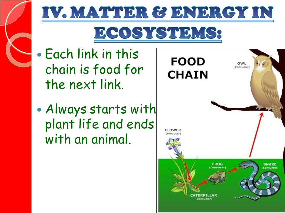IV. MATTER & ENERGY IN ECOSYSTEMS: