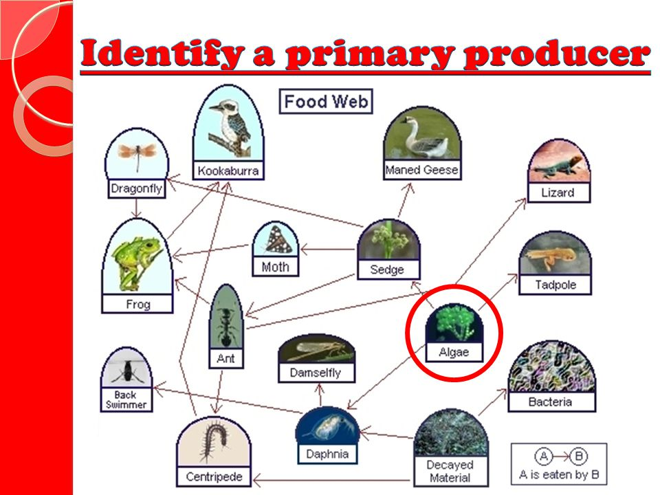 Identify a primary producer