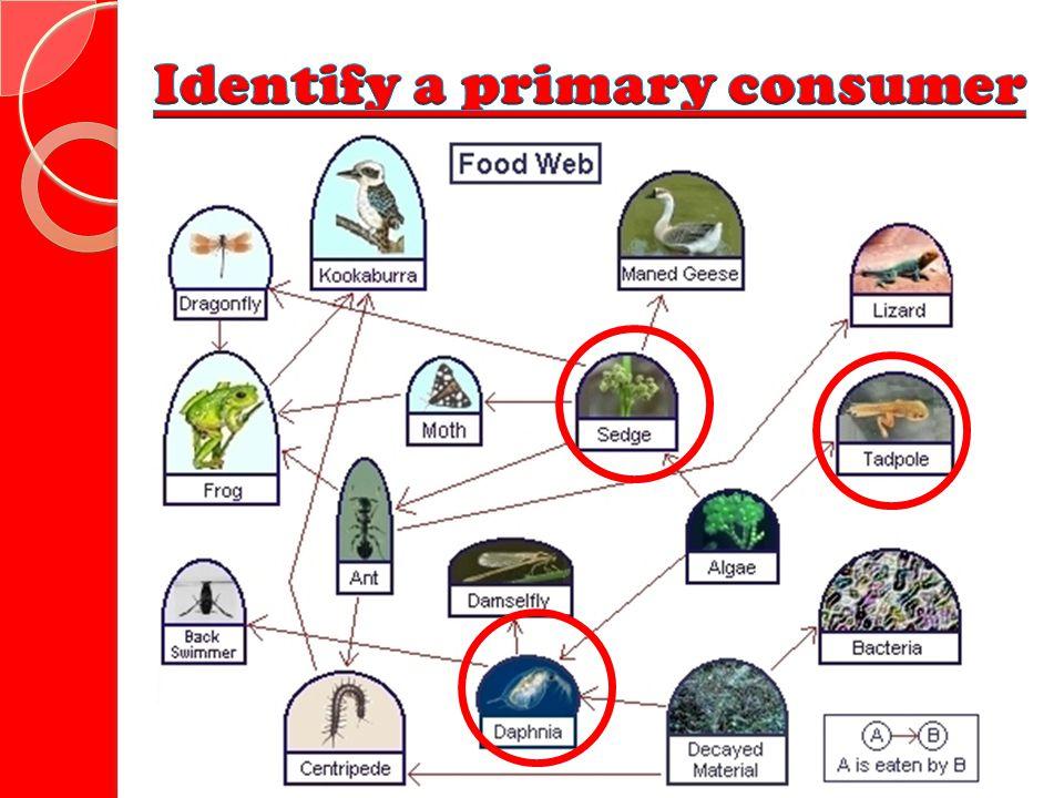 Identify a primary consumer