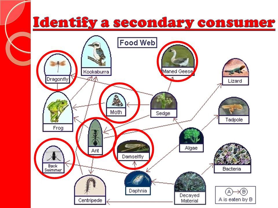 Identify a secondary consumer