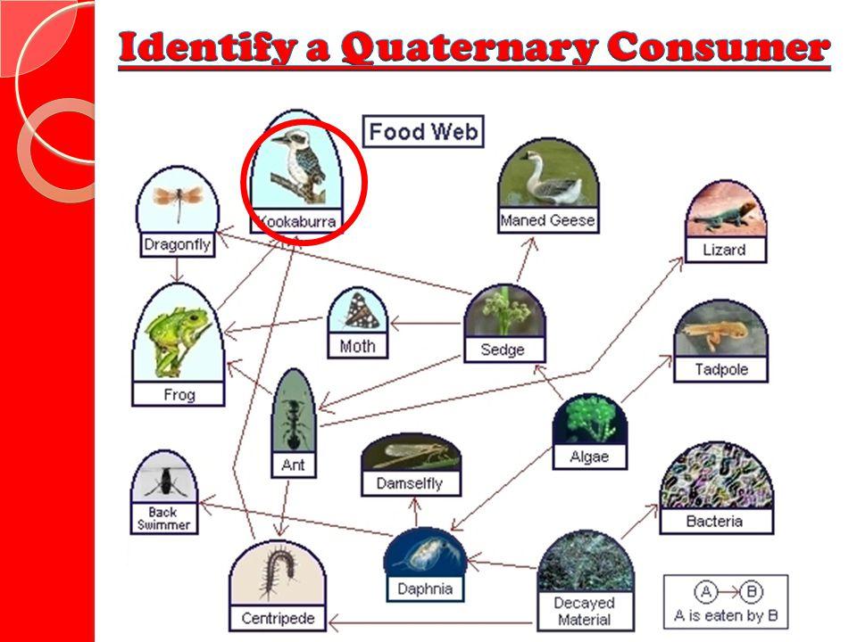 Identify a Quaternary Consumer