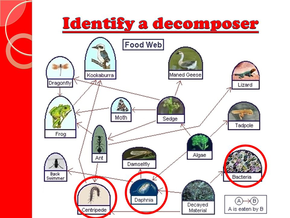 Identify a decomposer